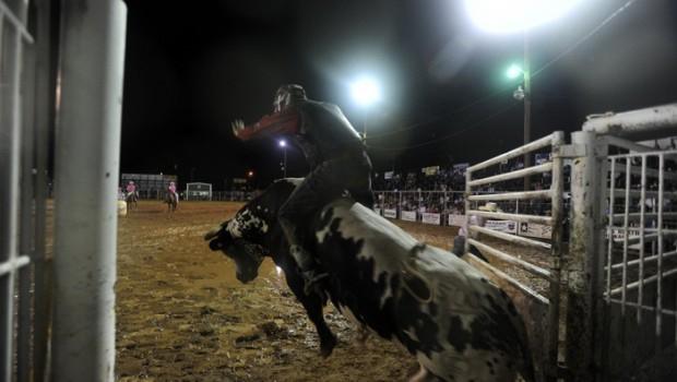 The point of no return arrives as a bull rider climbs on a bull. Some bulls weigh as much as half a ton.