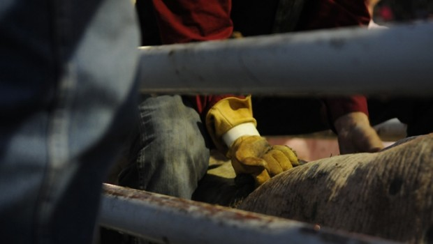 The gloved hand of a bull rider as he waits for the gate to open and the longest 8 seconds of his life to begin.