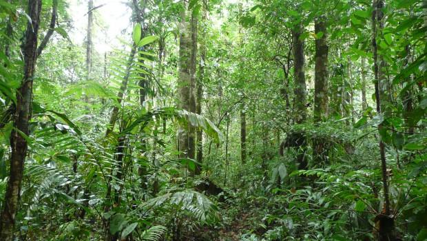 Amazonas 2 074